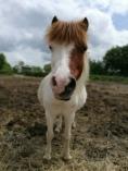 La petite Rosalie, très mignonne pour nos petits cavaliers